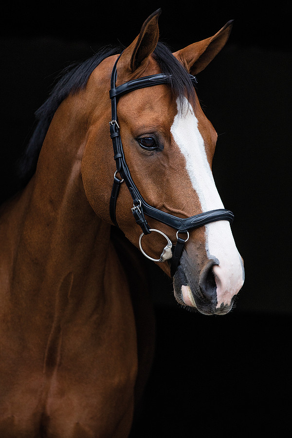 Micklem Deluxe Competition Bridle *