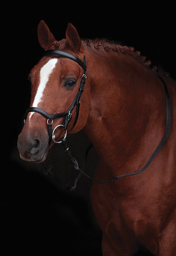 Micklem Competition Bridle *