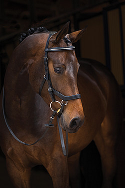 Micklem Diamond Comp. Bridle engl. Leder