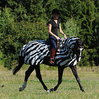 Bucas Buzz-​Off Riding Zebra