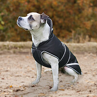Hundedecke Protection 200